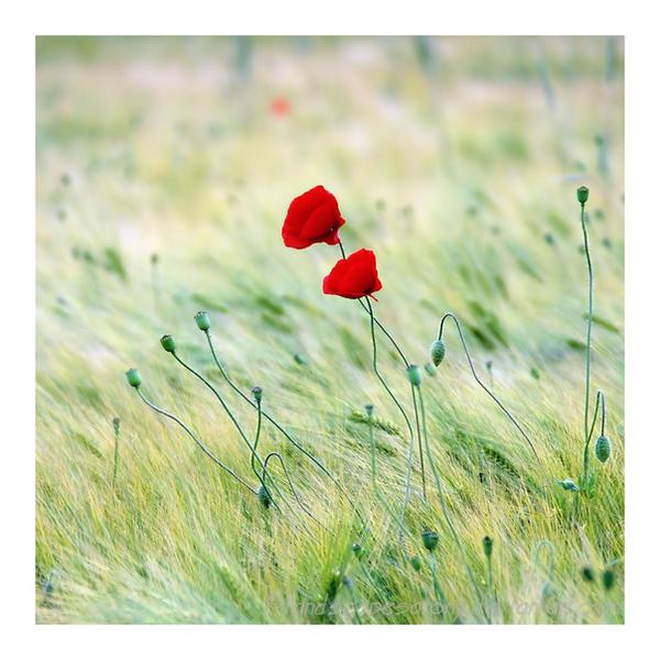 in the field No.38 by naturetimescape