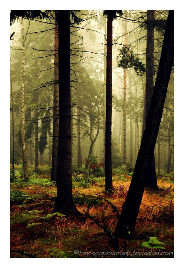 Autumn feelings no.21 by landscapesaxony