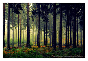 Autumn feelings no.26 by naturetimescape