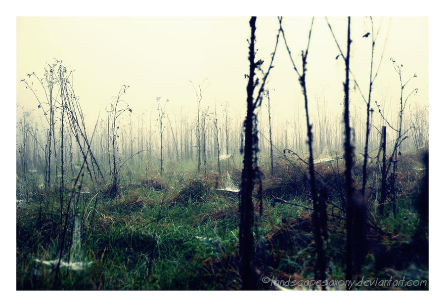 Autumn feelings no.32 by landscapesaxony