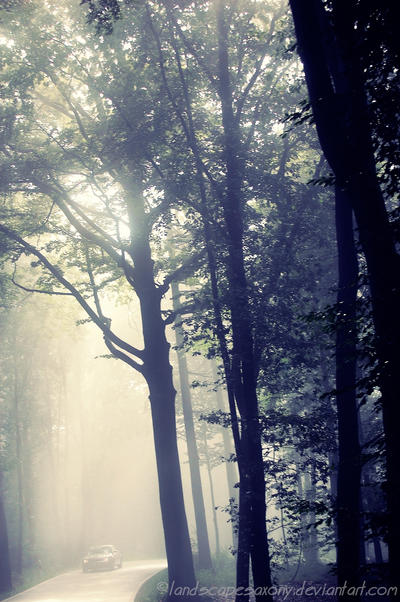magic forest No.6 by landscapesaxony
