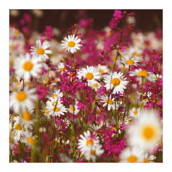 springtime Nr.10 by landscapesaxony