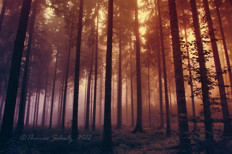 magic forest No.15 by landscapesaxony