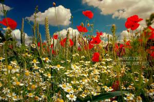 my poppyworld by naturetimescape