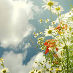 endless summer by naturetimescape