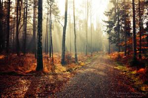 magic forest No.16 by naturetimescape