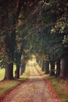 Autumn feelings no.60 by naturetimescape