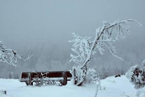 deep-frozen by naturetimescape