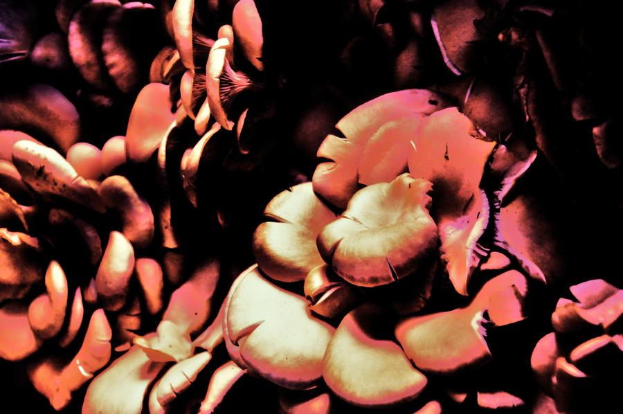 My Mushrooms by StrangerLyri