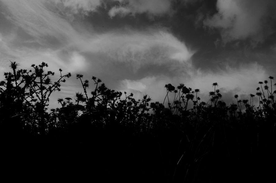 Twilight by StrangerLyri