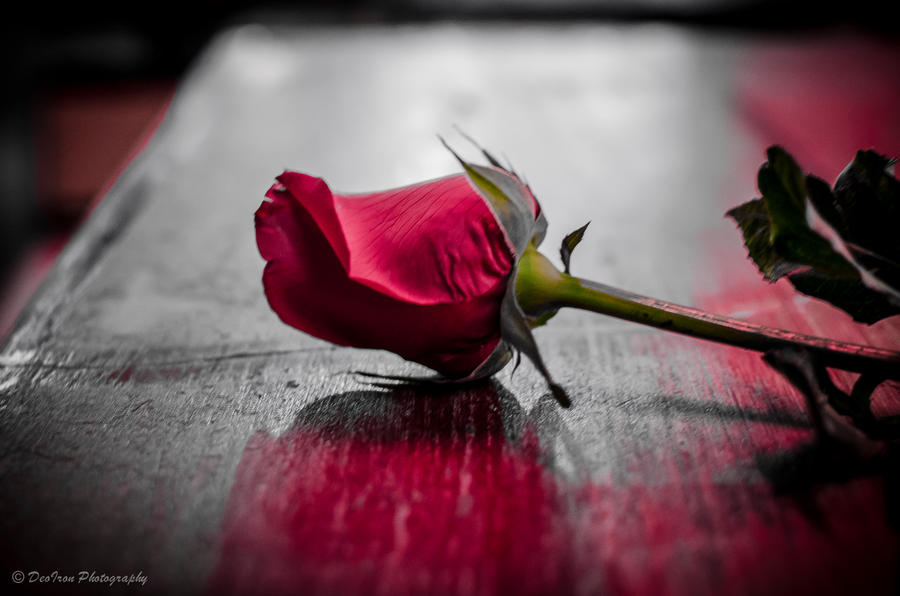 Emo Rose by Rayjoy019 on DeviantArt