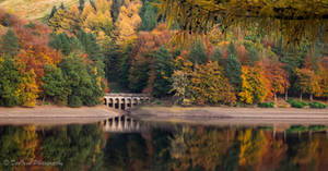 Autumn Colours...