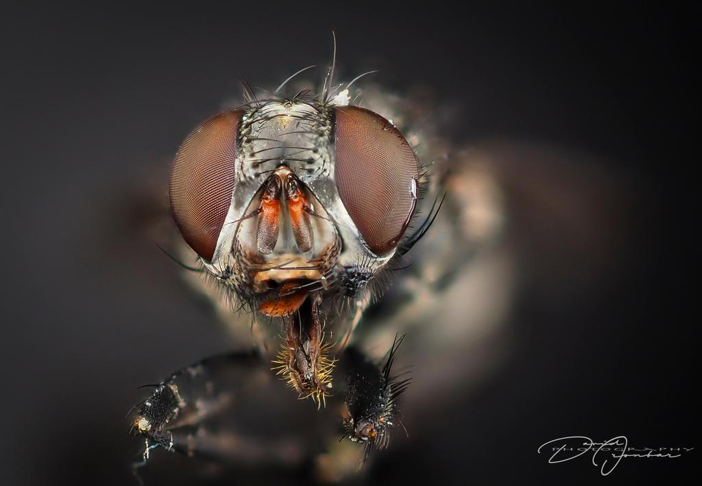 Common Garden Fly by DeoIron