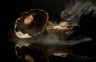 Steaming Mushrooms... by DeoIron
