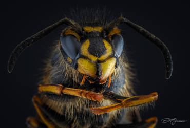 Wasp... by DeoIron