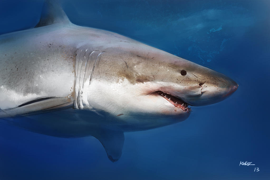 shark by KEKSE0719