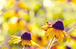 Sweet Sunshine by JessicaDobbs