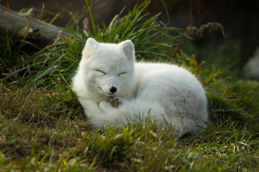 Fox-Nap :3 by JessicaDobbs