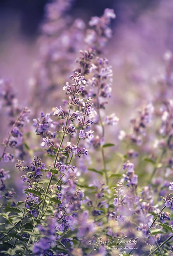 Purple Bliss by JessicaDobbs