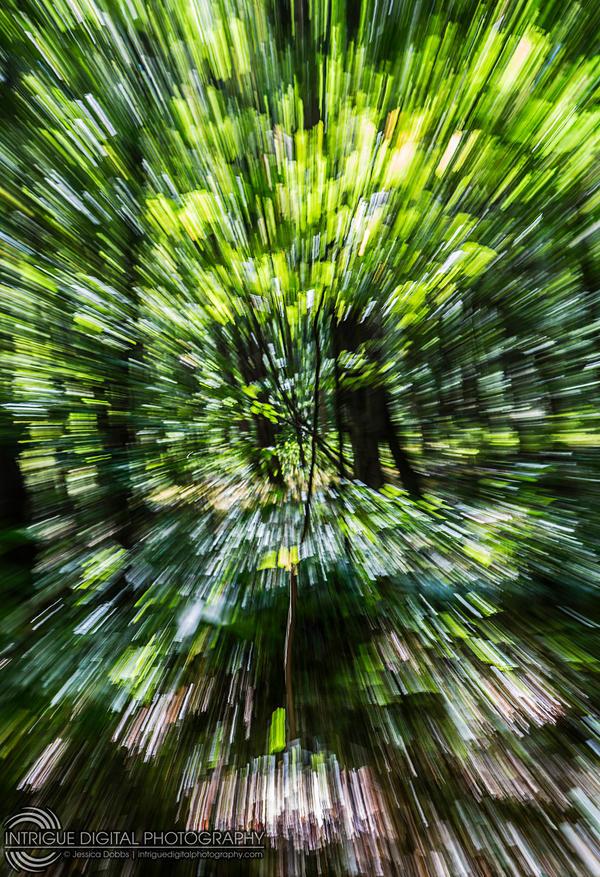 Warp Speed, Sulu! by JessicaDobbs