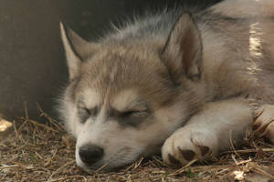 Timber at Rest by PoetryAccident