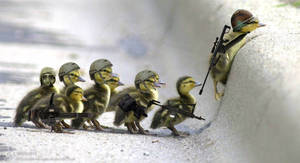 Military Ducklings - Canetons Militaires by Xykun