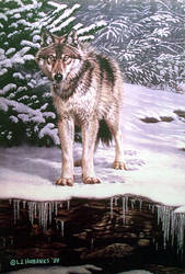 winter wolf by traits