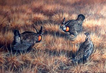 wisconsin prairie chickens by traits