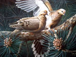 morning dove pair by traits