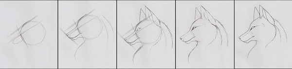 How To Draw - Wolf Head