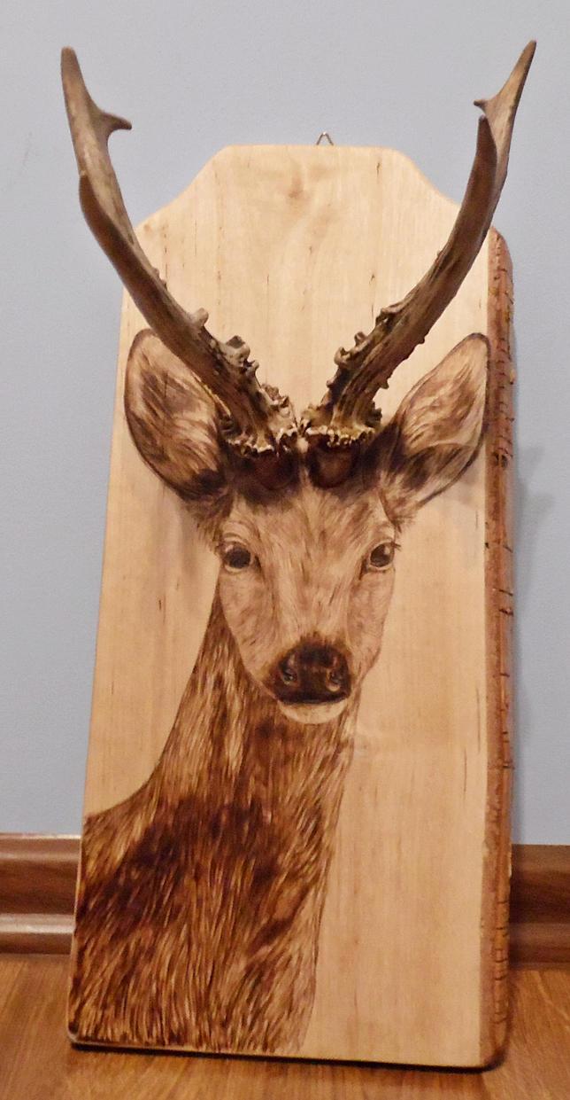 Roebuck by Art-Caren