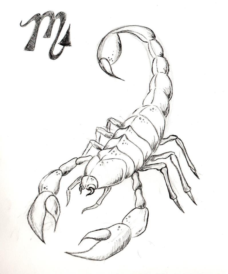 Scorpion sketch by PinkBunnie on DeviantArt