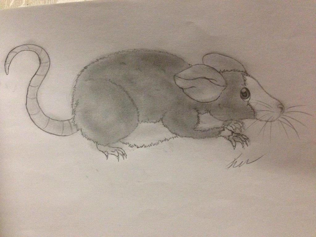 Rat Doodle by Izuri-Chan93