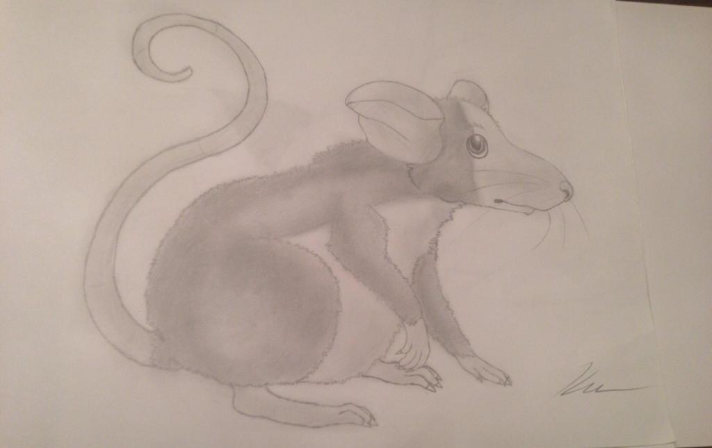 Rattie by Izuri-Chan93