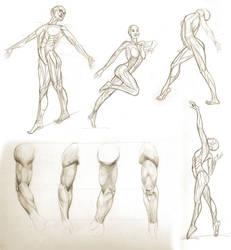 Anatomy studies - by userantonella