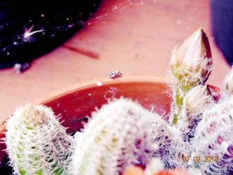 Little Spider ( Original) by linzy-yld