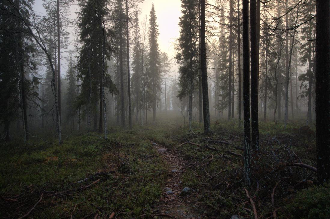 Mist in night by FinJambo