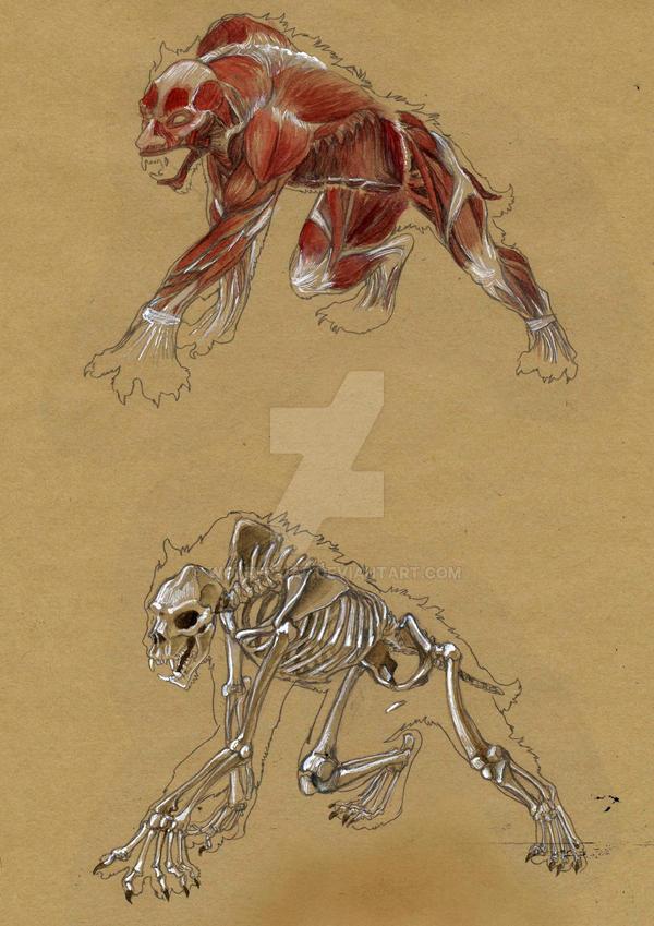 skeleton wallpaper 3d