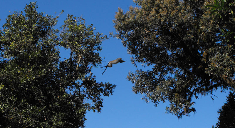Flying Monkey by RedPangolin