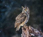 Great Horned Owl on a Snowy Evening