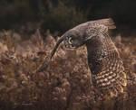 Field Hunter