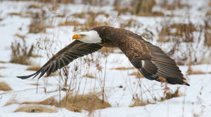 Winter Eagle Flight 20210227