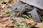 Tortoise Noms