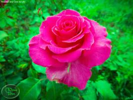 C'est une Rose Magique by UAkimov09