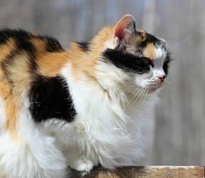 Kitty by DarkRose-87