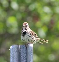 Fluffy bird