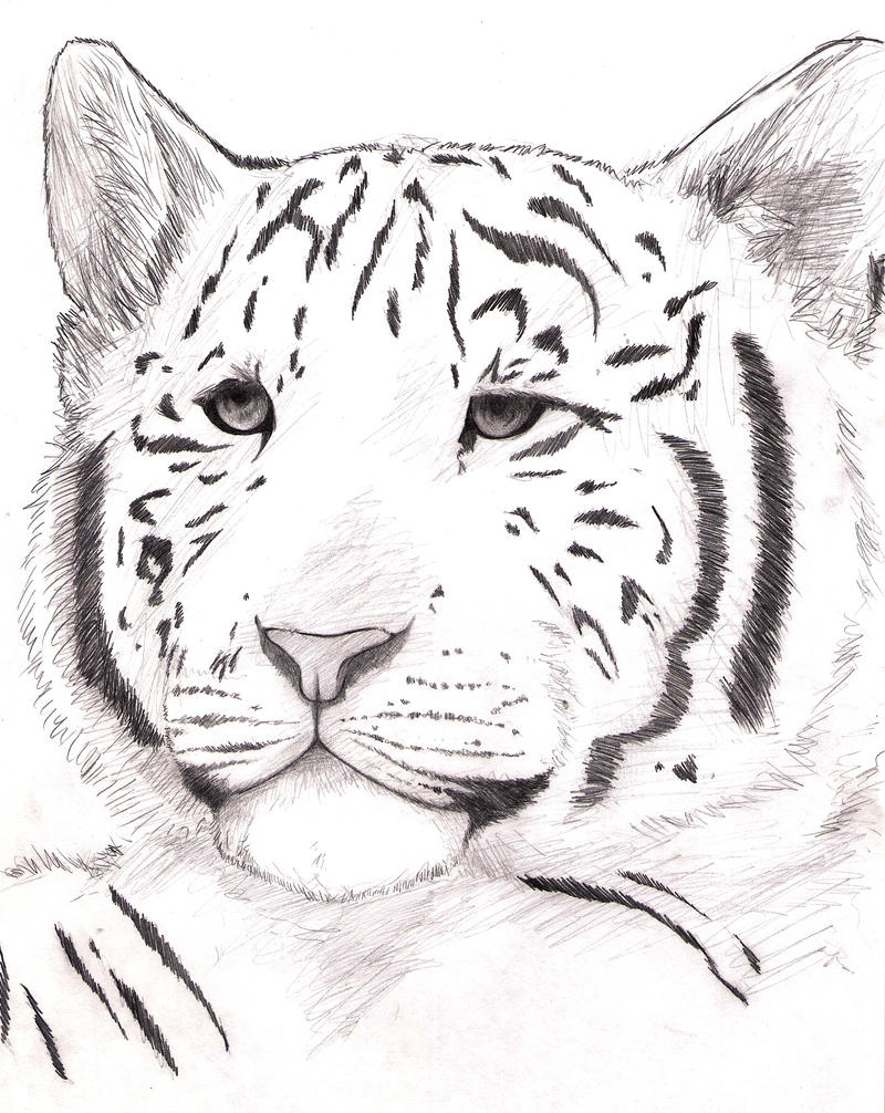 White tiger cub by wolfsouled on DeviantArt