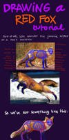 Red fox tutorial