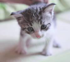 Kitty by Menekah