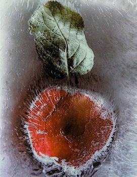 Pomme glace - Magazine Protegez-vous